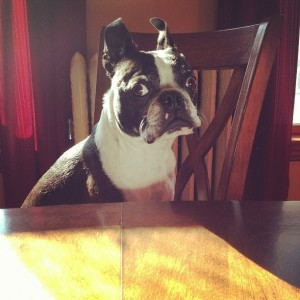 What? Dogs aren't suppose to dine at the table?