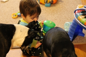 The instant swarming of dogs, Liam is in dog heaven.