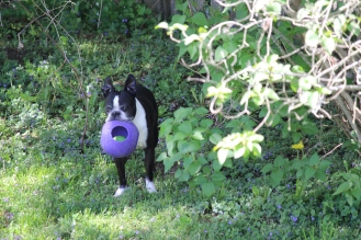 """Fenway with his """"precious"""", the best ball ever."""