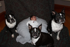 With his puppy brothers