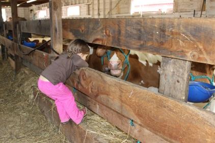 checking out the animal barns