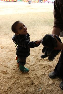 petting the bunnny